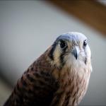 Montana-Raptor-Conservation-Center_Bryan-Gregson_GP_9054