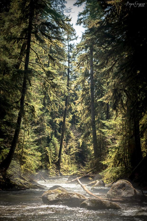 Chrome-Chaser-Lodge_Alaska_Forest_Bryan-Gregson-Photography_6