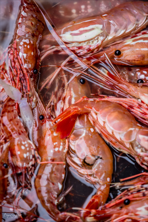 Chrome-Chaser-Lodge_Alaska_Prawns_Bryan-Gregson-Photography_5