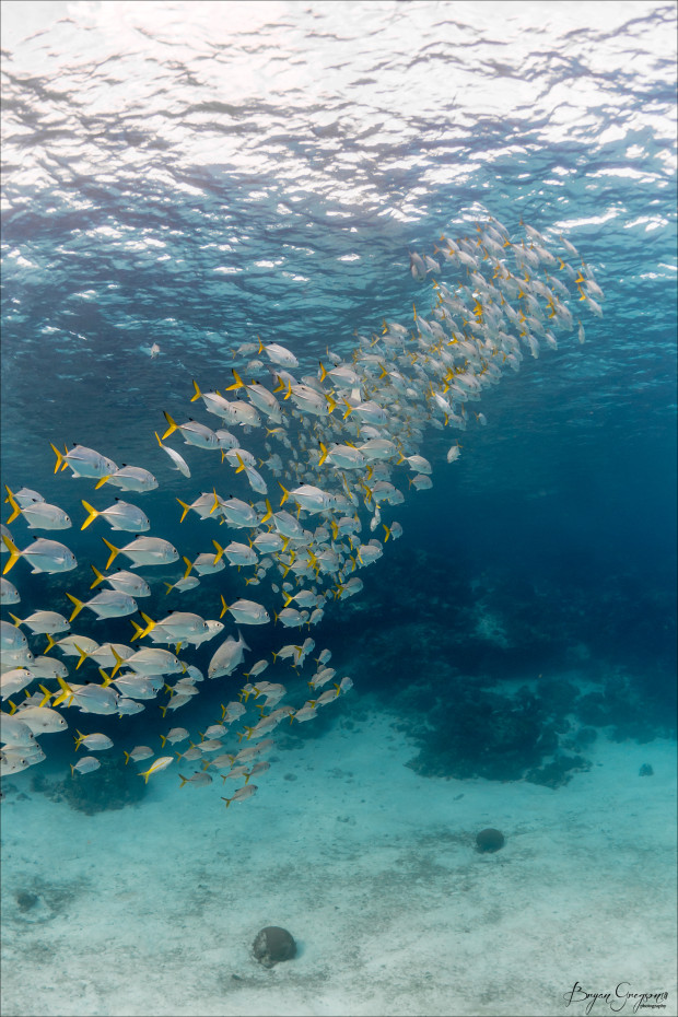 Underwater-Fish-School-1