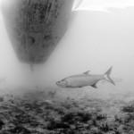 Bryan Gregson_Underwater-45