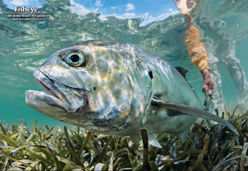 NorthWest Magazine_FishEye Sept 2015