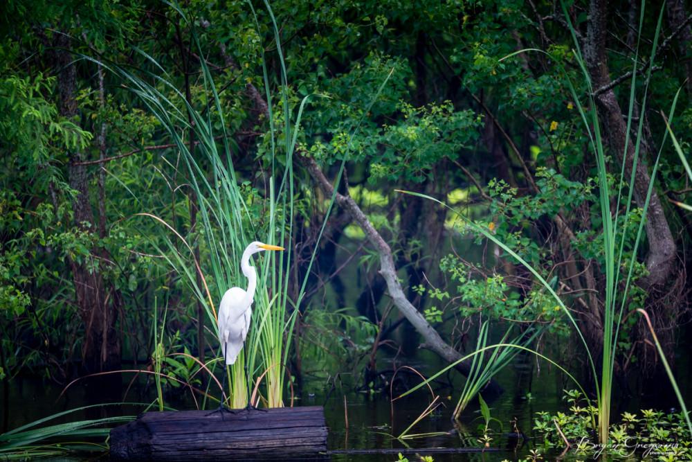 Gregson_Louisiana Redfish-6