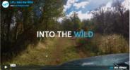 lpl_into-the-wild